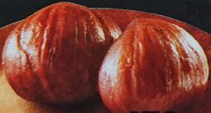 渋皮とは栗の一番外側の硬くてツヤツヤした皮の下にある繊維状の皮のこと